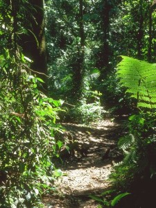 Path of God
